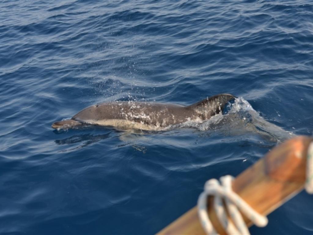 Οι μαθητές μας γράφουν για το Northern Aegean Dolphin Project