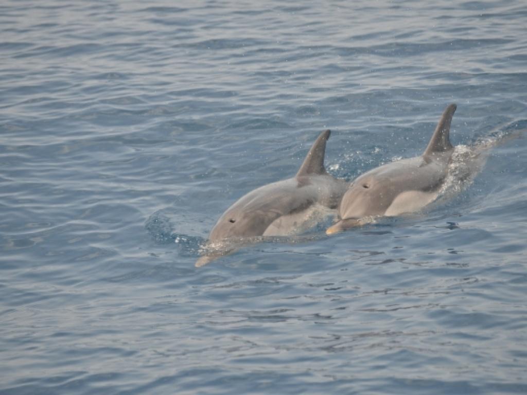 Καλοκαίρι στην Αλόννησο παρέα με τα δελφίνια